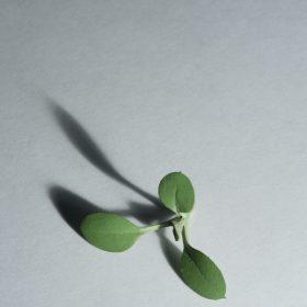 weed | Yoshihiro Suda